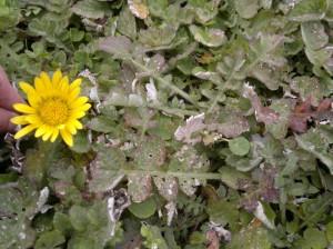 Test Case - Sassenheim Flowers 3