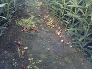Fungi growing