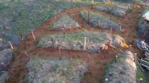 - Home Gardening 13