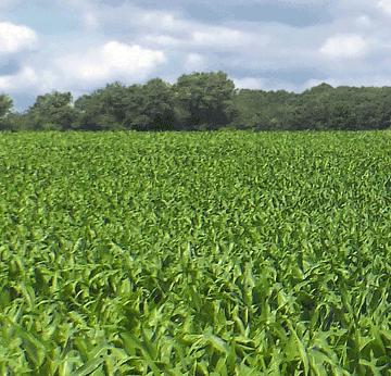 Soil Basics book biological farming