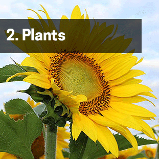 Plant nutrition essentials for healthy and strong plants.
